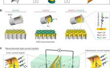 Nat. Commun.:外表面探针在纳米通道离子门控中的作用