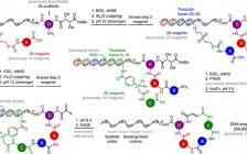 Nature子刊:用于发现生物活性小分子的第二代DNA模板化大环化合物库