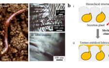 电子科技大学Advanced Materials: 仿蚯蚓润滑涂层:自调制减助、抗磨和抗污