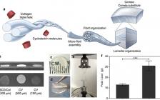 约翰霍普金斯大学Adv. Funct. Mater.:环糊精调制的I型胶原蛋白自组装来制备仿生角膜植入物
