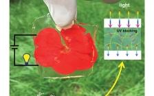 西南交大鲁雄Chemistry of Materials封面文章:基于导电高分子纳米纤维的透明导电水凝胶