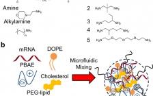 麻省理工学院Nano Lett.:优化可降解聚合物-脂质纳米粒子用于mRNA有效系统递送到肺内皮细胞和肺免疫细胞