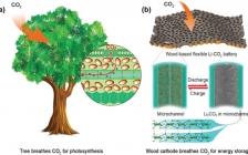 马里兰大学胡良兵团队EES:超高容量和稳定循环的柔性Li-CO2电池