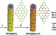 楼雄文Adv. Funct. Mater. : 镍单原子表面修饰分级MoS2纳米片及其增强电催化析氢性能