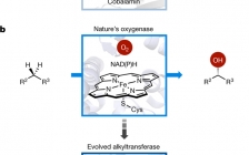 今日Nature:通过铁催化sp3C-H官能化来酶效应组装碳-碳键