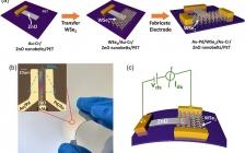 北科大张跃&张铮Nano Energy : 压电效应对超灵敏柔性光电探测器中混合维度范德华异质结构的界面电荷调控
