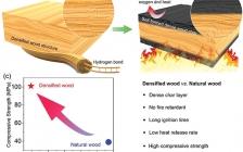 马里兰大学胡良兵Adv. Funct. Mater.:密实、自形成的炭层使阻燃木材结构材料成为可能