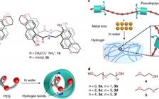 南方科技大学Nat. Chem.: 基于准聚轮烷的瞬态高度可拉伸水凝胶的剪切诱导组装