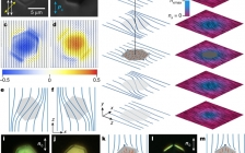 Nature最新报道:液晶中的弹性胶体磁单极子及可重构自组装