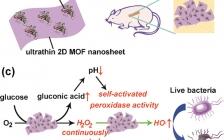 中科院长春应化所曲晓刚研究员ACS Nano: 二维金属有机骨架/酶杂化纳米催化剂作为良性、自激活级联试剂用于体内伤口愈合