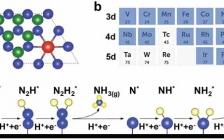 阿德莱德大学乔世璋JACS:构建过渡金属单原子催化剂的电催化氮还原活性图