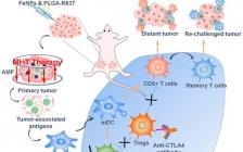苏州大学Nano Lett.报道: 铁纳米粒子用于低功率局部磁热治疗结合免疫检查点阻断实现全身抗肿瘤治疗