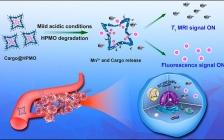 厦大高锦豪团队Nano Lett.报道: 多功能八足形中空多孔二价锰氧化物纳米平台用于实时可视化的药物递送