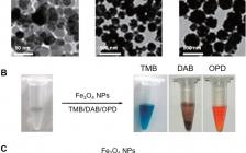 中科院生物物理所Acc. Chem. Res综述:新一代人工酶——纳米酶的新概念及应用