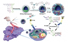 Adv. Mater.报道: X射线响应性核碱基配对相互作用稳定的仿生纳米胶囊用于脉冲药物递送
