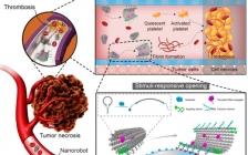 Accounts Chem. Res. :肿瘤血管靶向的智能纳米治疗剂
