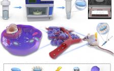 转化医学研究院周民团队《Biomaterials》连续发表2篇长文:纳米药物用于增强肿瘤放射治疗