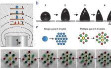 东南大学赵远锦Adv. Mater.综述:柔性磁流体的设计和应用