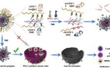 Adv. Mater.: 双锁纳米粒子扰乱PD-1/PD-L1通路用于有效肿瘤免疫疗法