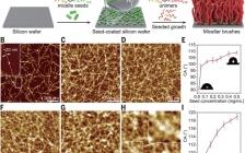 今日Science聚合物刷:多功能胶束刷实现表面结晶驱动生长
