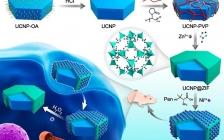 江南大学徐丽广&匡华JACS:手性核-壳纳米组装体用于体内活性氧的定量监测和成像