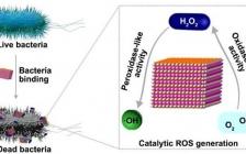 南京邮电大学 ACS Nano:Cu2WS4纳米酶的细菌选择性结合与高效抗菌