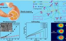 """南京工业大学ACS Nano:""""高拉伸""""和""""超灵敏""""二者兼得的人体肌肉仿生自修复水凝胶用作应变和温度传感器"""