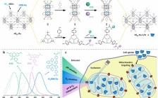 美国芝加哥大学林文斌J. Am. Chem. Soc.:用于比例型pH和氧气传感的多功能纳米金属有机单层