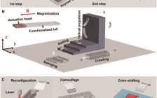 杜学敏&吴新宇AFM:仿生自适应水凝胶微型机器人的变形、伪装和变色