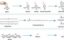 Prog. Poly. Sci.综述:生物基高分子材料:结合化学合成与材料加工