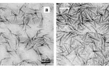 北京化工大学闫寿科课题组Macromolecules:高温松弛和重结晶导致定向聚乙烯分子超薄膜中不对称叶状晶体的形成