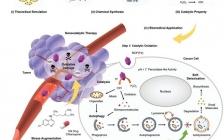施剑林院士团队 Adv. Mater.:利于金属有机框架(MOF-Fe)Fenton纳米剂与抑制自噬作用,从而协同治疗癌症