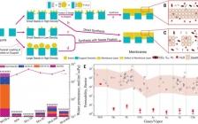 今日Science:Na+门控水传导纳米通道促进CO2转化为液体燃料