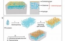 南洋理工大学陈晓东课题组Adv. Funct. Mater.:用于皮肤电子学的机械互锁水凝胶-弹性体混合物