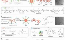 南洋理工大学浦侃裔课题组Acc. Chem. Res.:基于半导体聚合物纳米材料的近红外光激活新型肿瘤药物