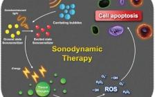 韩国高丽大学Jong Seung Kim团队Chem. Soc. Rev.:多功能声敏剂在肿瘤声动力治疗中的应用
