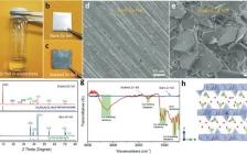 Adv. Funct. Mater.:无枝晶锌负极的设计用于水系锌电池