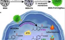 长春应化所 Chem: 利用中性粒细胞膜定向生物正交合成靶向炎症的手性药物