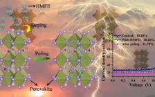 苏州大学邹贵付课题组&南昌大学熊仁根课题组Angewandte Chemie:分子铁电驱动的高效钙钛矿太阳能电池