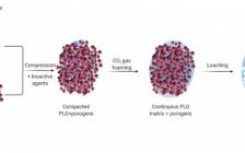 哈佛大学David J. Mooney Acc. Chem. Res.:生物材料在免疫调节中的用途