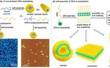 Acc. Chem. Res.综述:DNA-π两亲分子的设计、自组装和应用