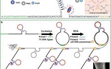 海南大学 Nat. Commun.:超高吸附力和选择性!水凝胶DNA-UEH助力从海水中提取铀