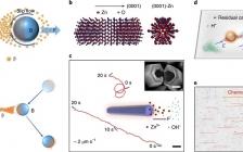 港大&中科院物理所 Nature Nanotechnology:人工合成系统实现群体智能!基于化学偶联的复合物模拟自然界共生系统
