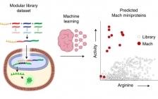 麻省理工 Nat. Chem.:机器学习又一佳作!深度学习设计靶向核的非生物微蛋白